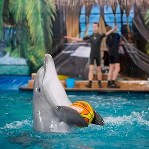 Дельфинарии, океанариумы Новороссийска