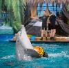 Дельфинарии, океанариумы в Новороссийске
